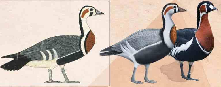 Arte egípcia de 4.600 anos atrás revela um ganso extinto