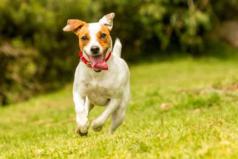 Por que cachorros e gatos correm em rajadas aleatórias de velocidade?