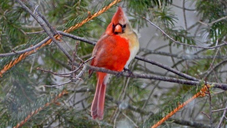 Pássaro raro é fotografado nos Estados Unidos por ornitólogo aposentado