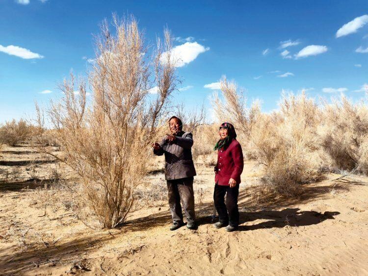 Conheça a história do casal que reflorestou um deserto