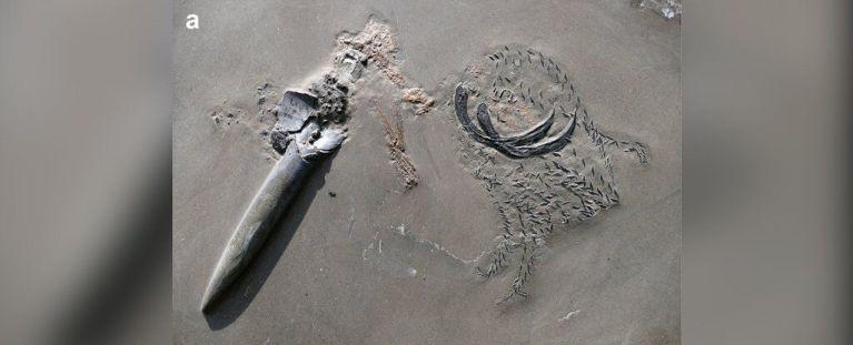 Incrível fóssil de uma lula antiga comendo um crustáceo enquanto era comida por um tubarão foi encontrado
