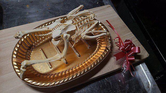 Artista conquista usuários das redes sociais reconstruindo esqueletos