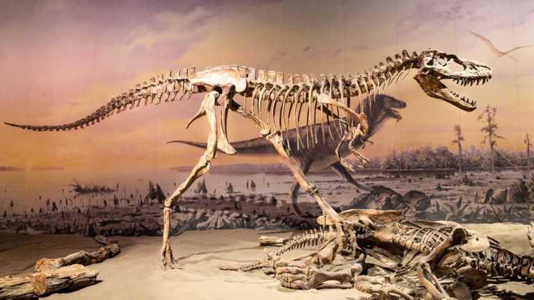 Dinossauros grandes estavam sujeitos à extinção antes do asteroide