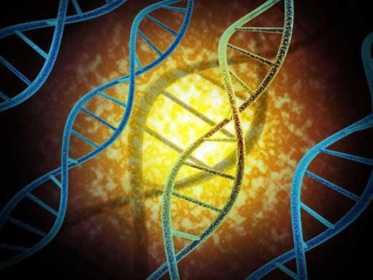 """Impressionantemente uma porcentagem pequena do nosso DNA é exclusivamente """"humana"""""""