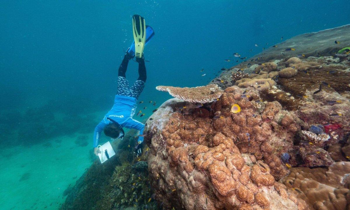 Coral1 1400x840, Fatos Desconhecidos
