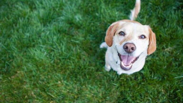 Estudo mostra que os cachorros são programados para entender os humanos desde seu nascimento