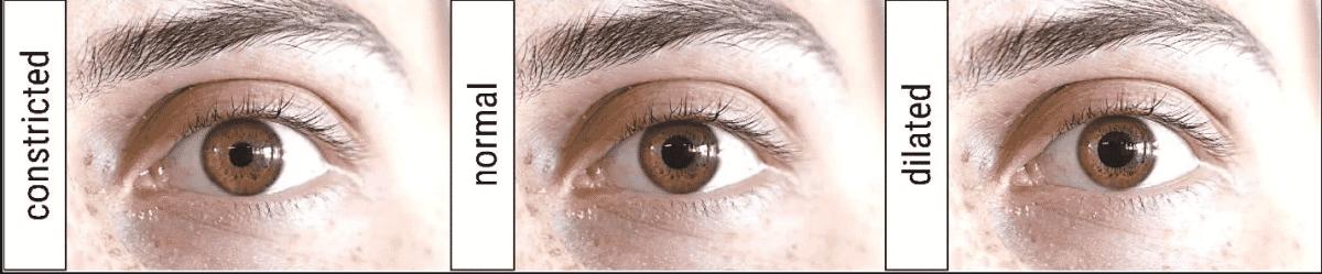 Pupila1, Fatos Desconhecidos