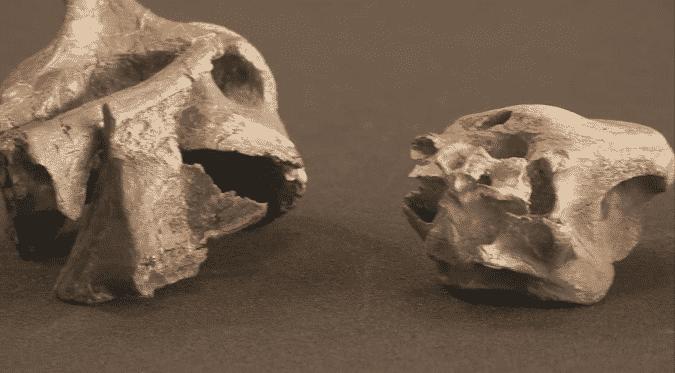 Esse fóssil enigmático da Ilha de Wight revela dois novos dinossauros predadores