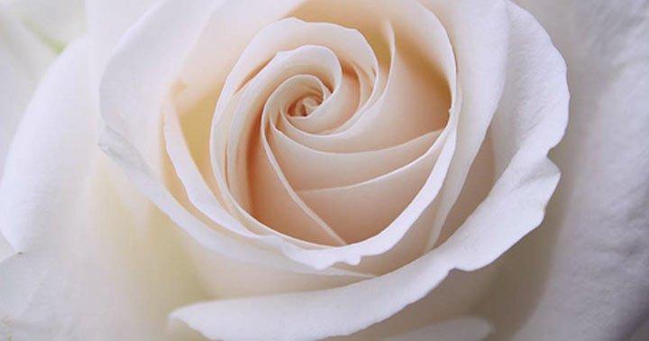 banho-de-rosas-brancas nova odessa fatos e eventos