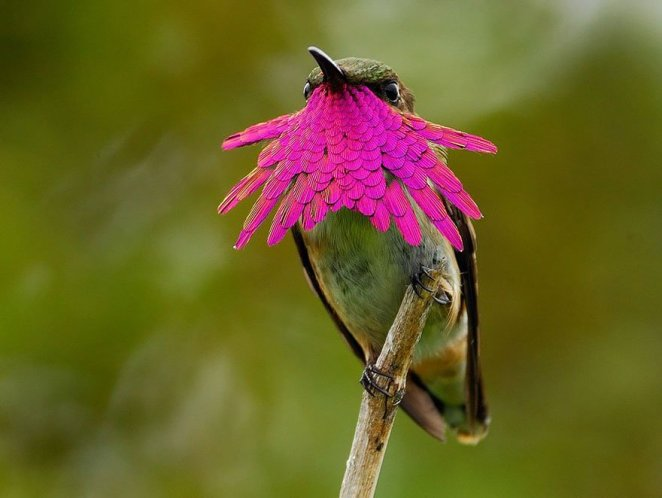 A exuberante beleza dos beija-flores em detalhes na natureza fatos e eventos (10)