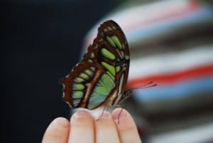 O que é o amor nova odessa fatos e eventos (5)