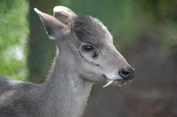 Animais interessantes nova odessa fatos e eventos (28)