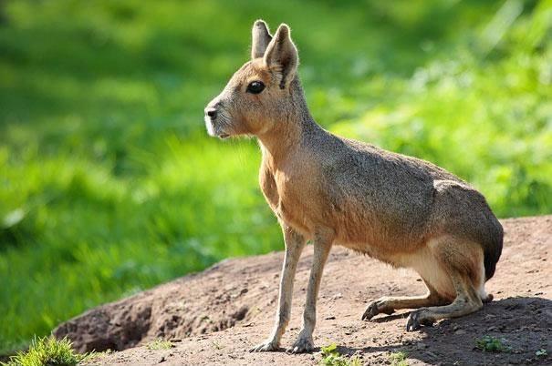 Animais interessantes nova odessa fatos e eventos (10)