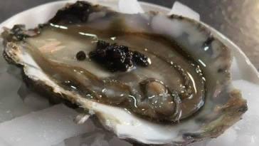 O que é Caviar nova odessa fatos e eventos (2)