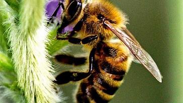 Os insetos mais perigosos do mundo nova odessa fatos e eventos (2)
