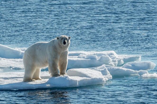 Polo norte nova odessa fatos e eventos (11)