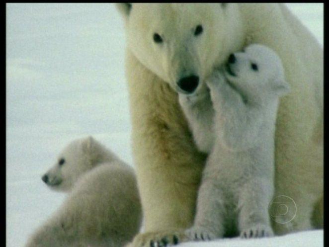 curiosidades sobre o Polo Norte nova odessa fatos e eventos (2)