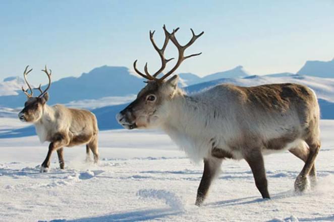 curiosidades sobre o Polo Norte nova odessa fatos e eventos (11)