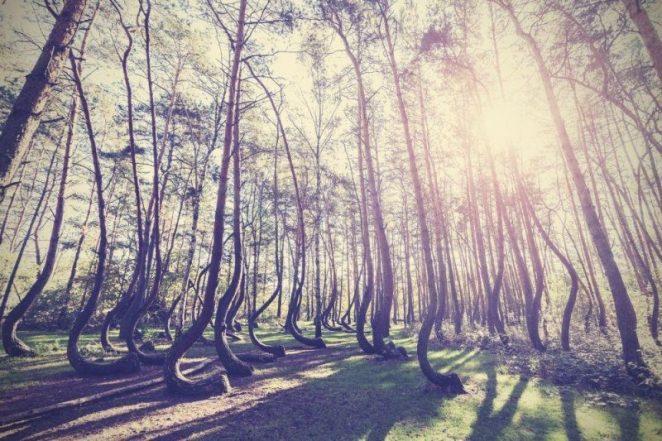 maravilhas naturais nova odessa fatos e eventos (23)