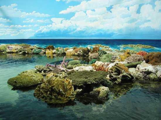 Maravilhas Naturais do Mundo nova odessa fatos e eventos (11)