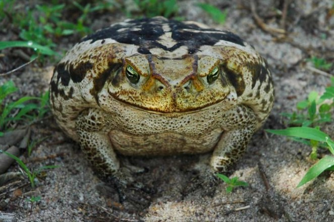Animais do Pantano nova odessa fatos e eventos (22)