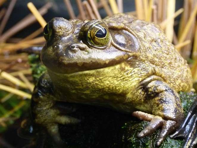 Animais do Pantano nova odessa fatos e eventos