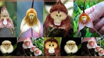Flores Bizarras nova odessa fatos e eventos (9)