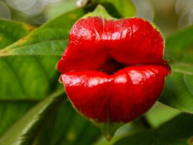 Flores Bizarras nova odessa fatos e eventos