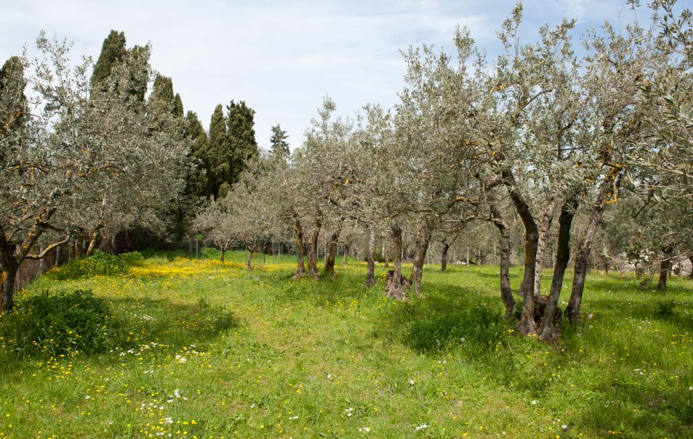 Passeggiata tra gli olivi la vigna ed i cipressi