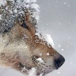 cropped-wolf-1975823_1920-1-2.jpg