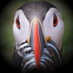 bird-4727746_1280