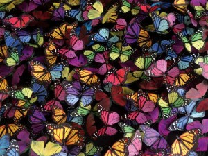Multi Coloured Butterflies