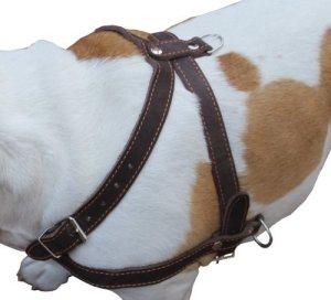 De haute qualité en cuir pour chien tirer Harnais de promenade. 83,8cm -37«poitrine, 2,5cm larges Sangles. Pitt Bull, Rottweiler