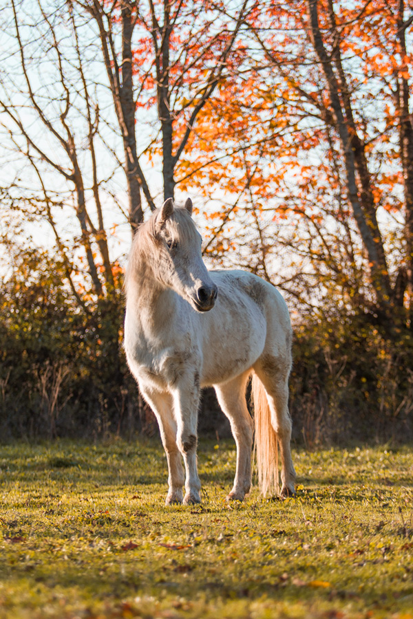 cheval gris automne