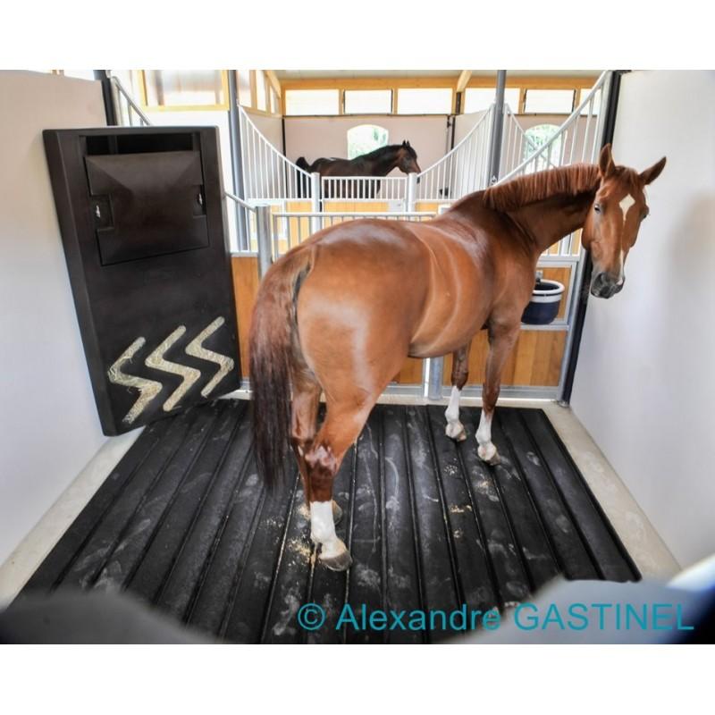physiogom tapis de box chevaux