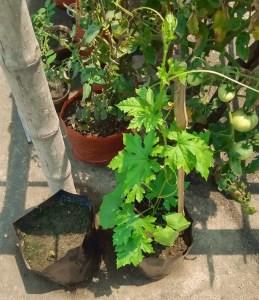 homemade food to homegrown food