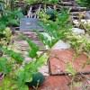 Grow watermelon - Real reasons