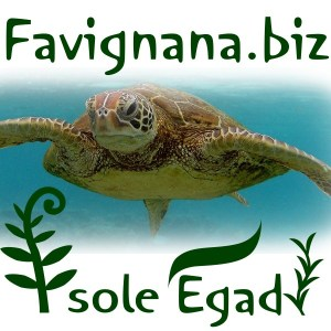 Logo Favignana Biz