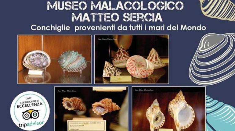 Museo Malacologico Conchiglie Favignana