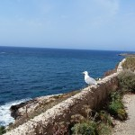 Photo of the day: Seagull at the Royal scindo Step Favignana