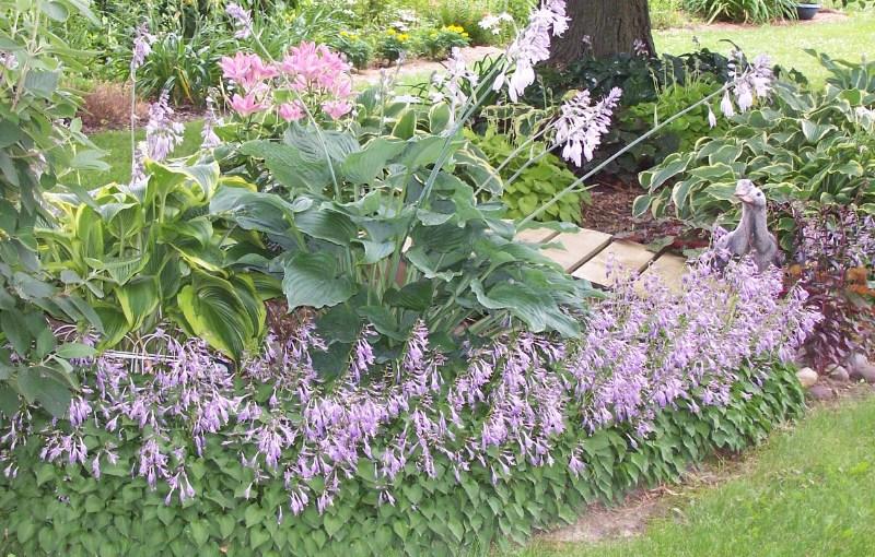 Perennial Bed Border Using Hosta Favorite Perennials