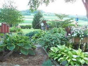 Lady-Isobel-Barnett-in-the-Garden-300
