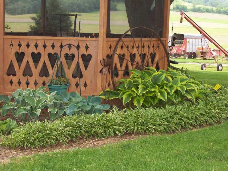 Design Ideas for Hosta Gardens - Favorite Perennials on and hosta flower bed, hosta garden ideas around large tree, hosta garden design,