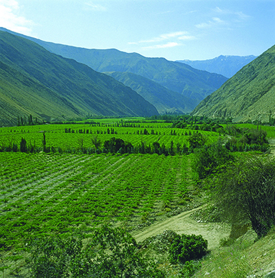 Elqui valley in the far North demonstrates the diversity of terroirs in Chile