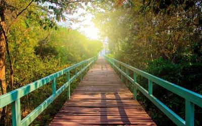 Building Bridges Fundraising for 2020