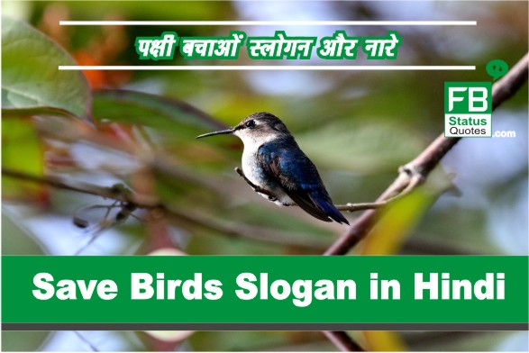 Save Birds Slogan in Hindi