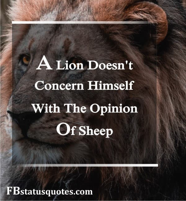 Best Lion Quotes In English