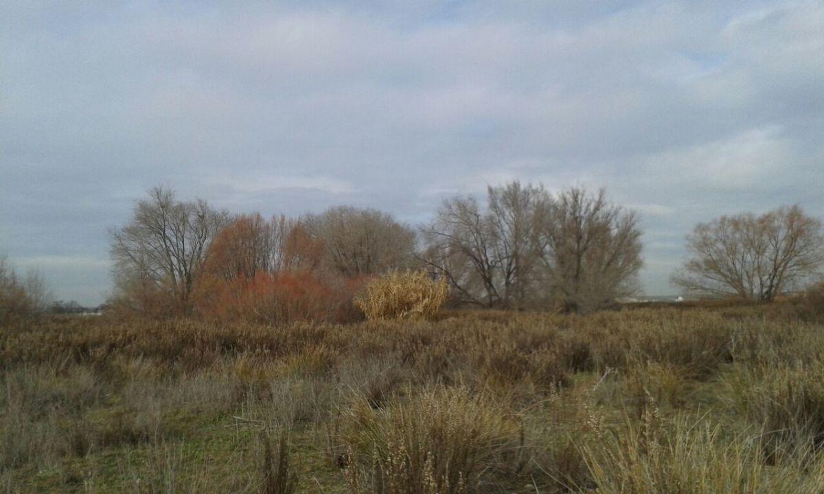 El humedal de El Sueño, un hábitat olvidado