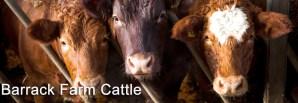Barrack Farm Cattle