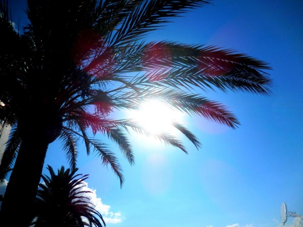Ibiza palmboom